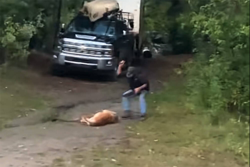 A screenshot from a YouTube video posted on Sept. 27 of a man killing a cougar to protect his dog. (YouTube/MCQMX Moto for BC)